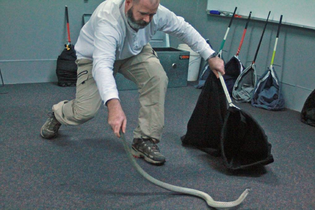 Services and programs officer Nathan Dodwell gets hands on with a slithery customer.